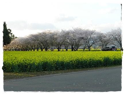 桜2014033004