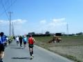 熊谷さくらマラソン34