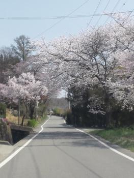 20140427春爛漫