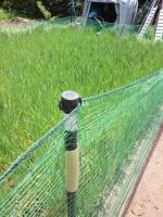 20140524防鳥網0