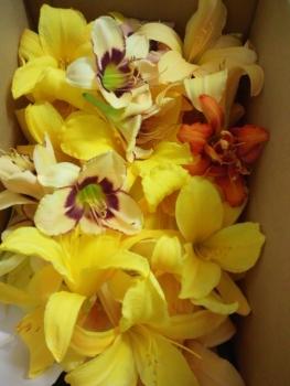 20140717花