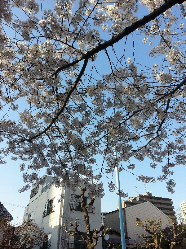 fc2_2014-04-02_13-24-04-521.jpg