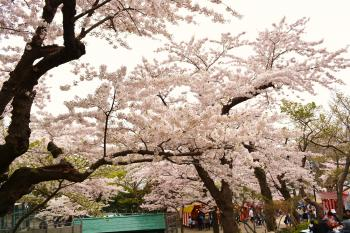 2014-5-3-hanami+009_convert_20140511110649.jpg