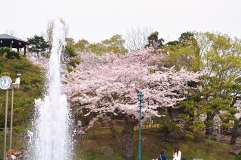 2014-5-3-hanami+013_convert_20140511111208.jpg