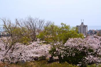 2014-5-3-hanami+020_convert_20140511111114.jpg