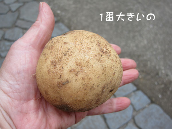 jyagaimo-5