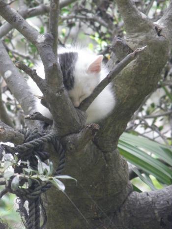 001_convert_20140919120132木と猫1