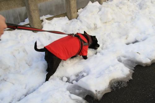 雪道散歩2