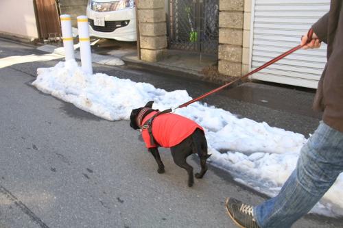 雪道散歩3