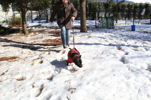 雪道散歩4