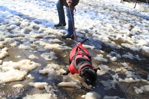 雪道散歩6