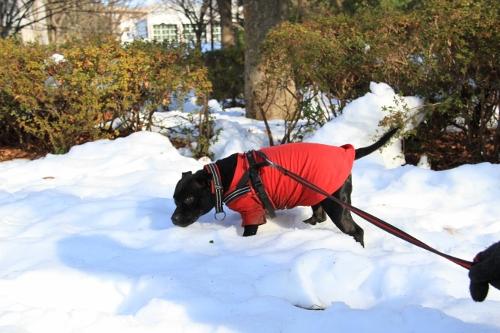 雪道散歩14