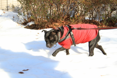 雪道散歩15