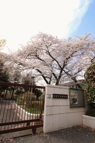 お花見散歩15