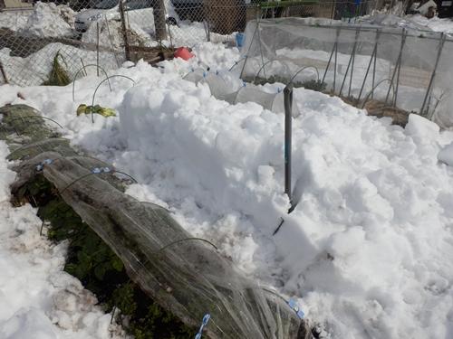 3雪の畑10