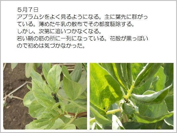page空豆10