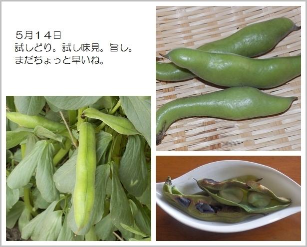 page空豆11
