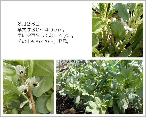 page空豆6