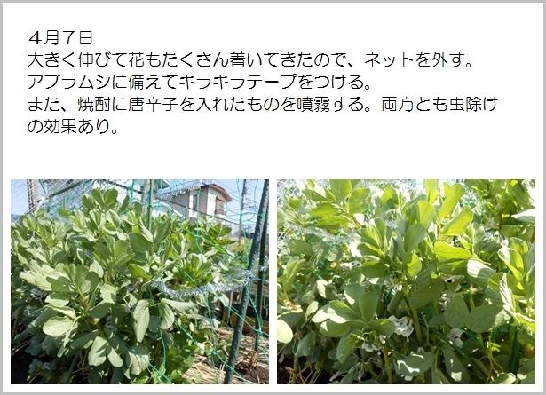 page空豆7