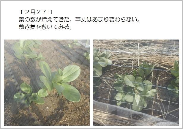 page空豆2