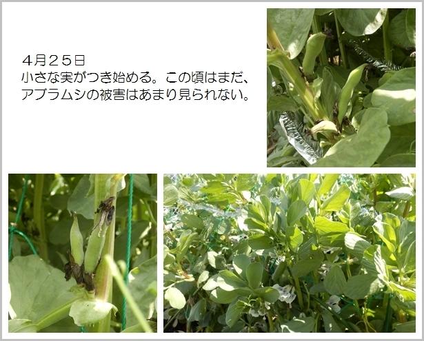 page空豆9