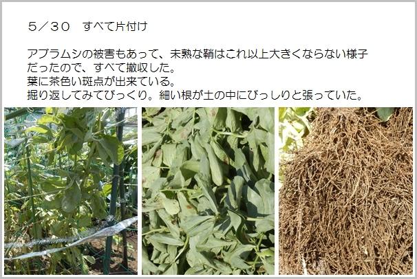 page空豆14