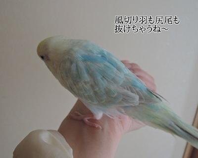20140329-518.jpg