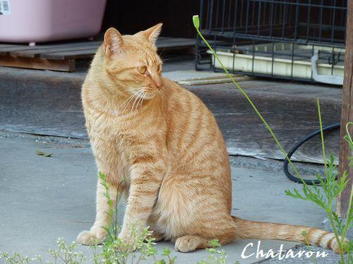 chichibi243.jpg