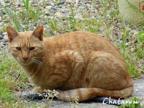 chichibi247.jpg