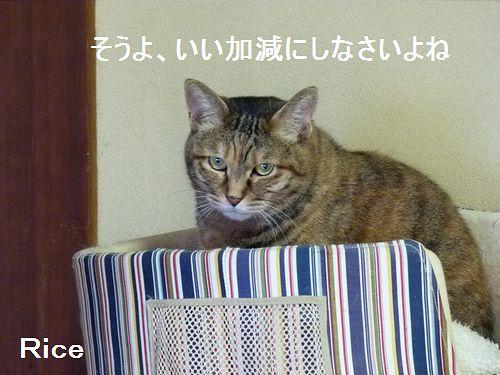 rice14_20140504221438bdd.jpg