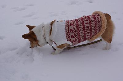 雪、食べてみるでち