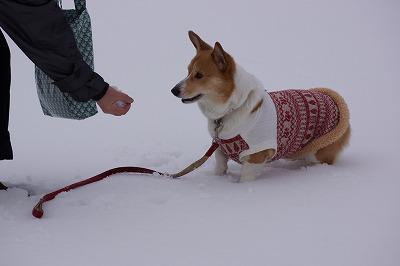 それって雪??