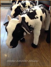 20140227 牛 那須での食