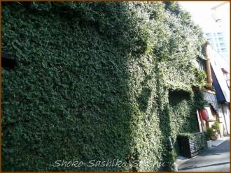 20140315 家 緑3 冬の緑の館