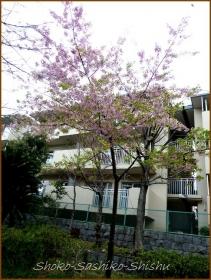 20140322 河津桜 春がそこに