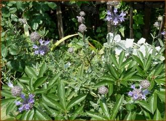 20140513 紫 1 5月の花