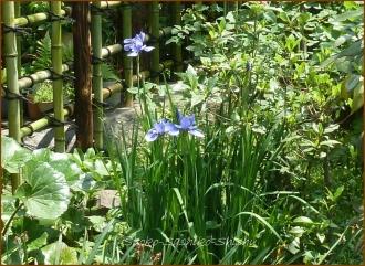 20140513 紫 2 5月の花