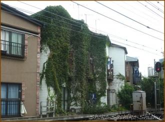 20140824 緑の館 線路沿い  目白帰り道