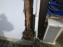木材の腐朽