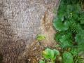 樹木のイエシロアリ