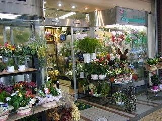 沢井生花店 000