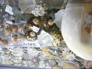 真珠コーナー 023