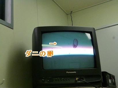 P1050101.jpg