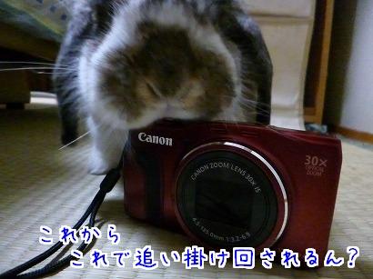P1050271.jpg