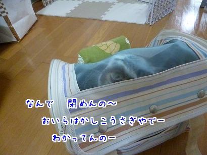 P1050698.jpg