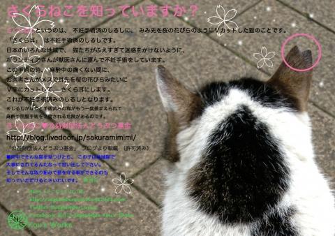 sakuraneko.jpg