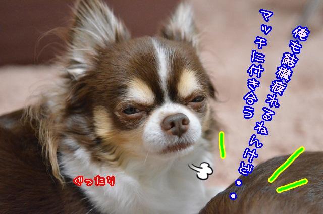 DSC_2747_20140213155057366.jpg
