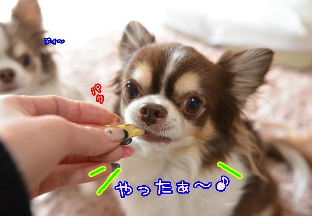 DSC_2809_201402162300383c0.jpg