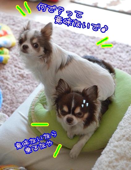 DSC_2870.jpg