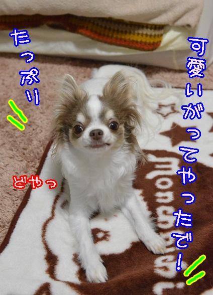 DSC_2976_20140311212313ee1.jpg